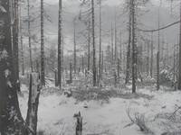 winter-spaz