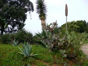 Lokrum botanical garden