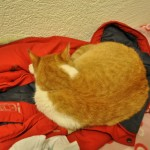 Котката Оскар на Ирена