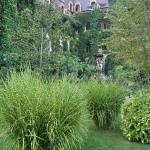 Много и разнообразни растения
